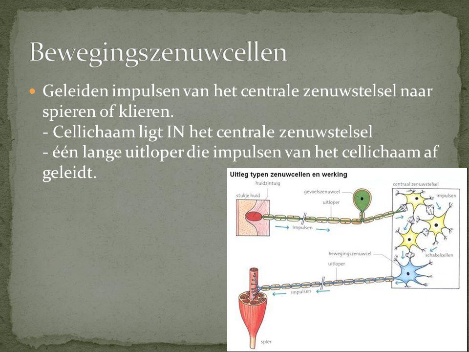 Bewegingszenuwcellen