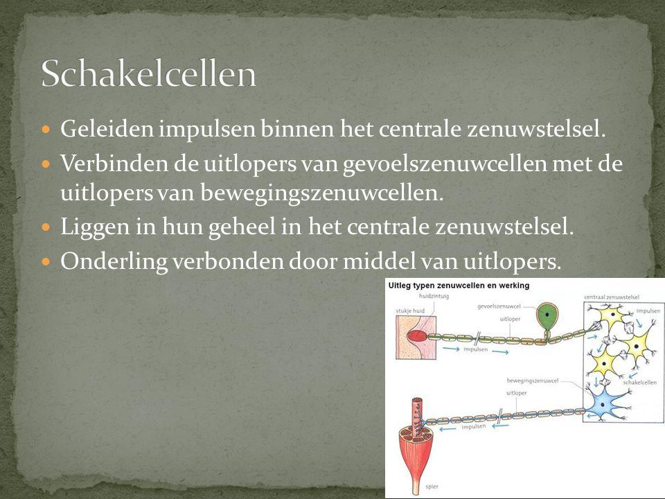Schakelcellen Geleiden impulsen binnen het centrale zenuwstelsel.