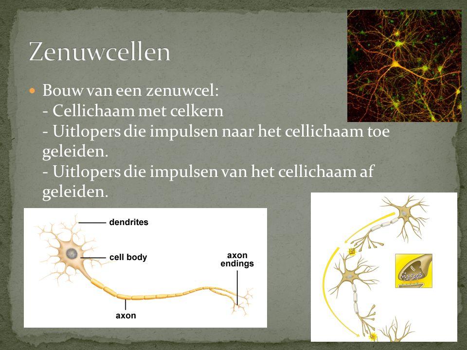 Zenuwcellen