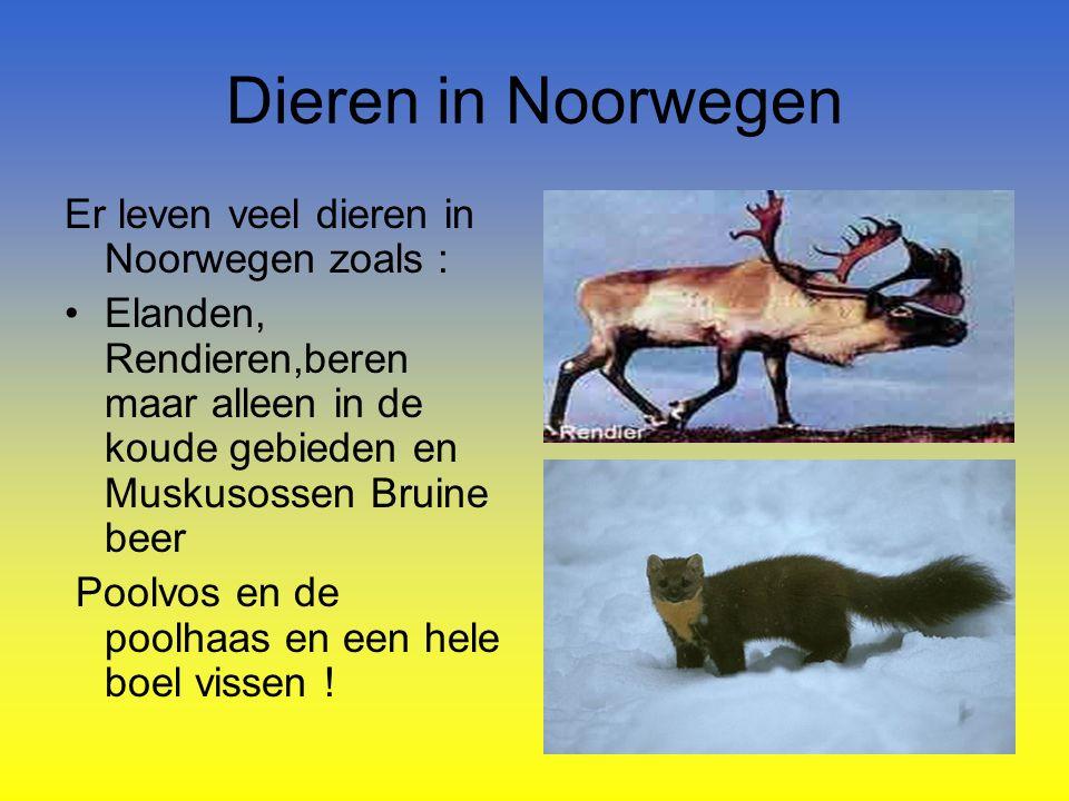 Dieren in Noorwegen Er leven veel dieren in Noorwegen zoals :