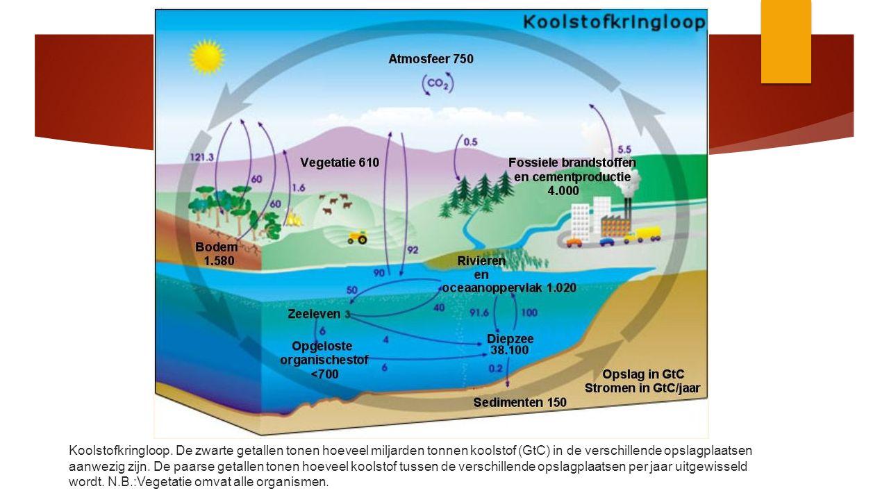 Koolstofkringloop.