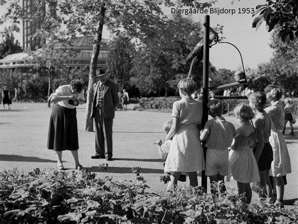 Diergaarde Blijdorp 1953