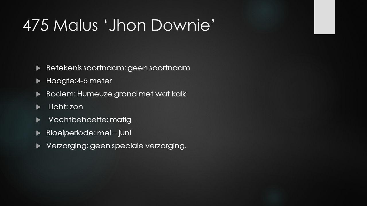 475 Malus 'Jhon Downie' Betekenis soortnaam: geen soortnaam
