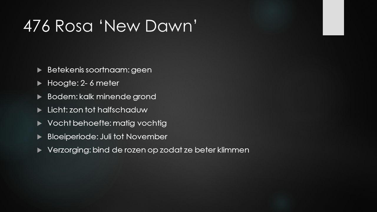 476 Rosa 'New Dawn' Betekenis soortnaam: geen Hoogte: 2- 6 meter