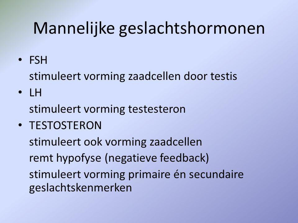 Mannelijke geslachtshormonen
