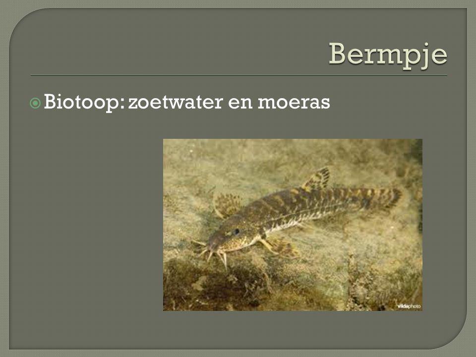 Bermpje Biotoop: zoetwater en moeras