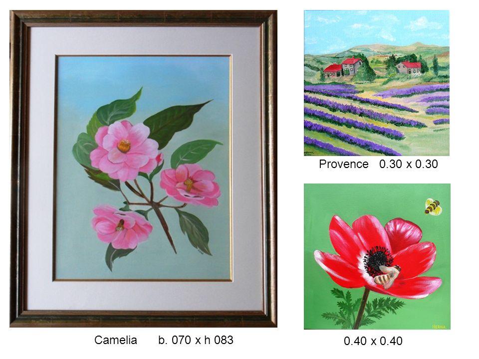 Provence 0.30 x 0.30 Camelia b. 070 x h 083 0.40 x 0.40