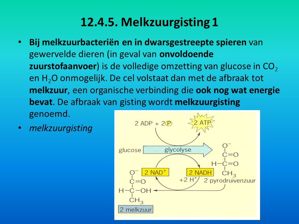 12.4.5. Melkzuurgisting 1