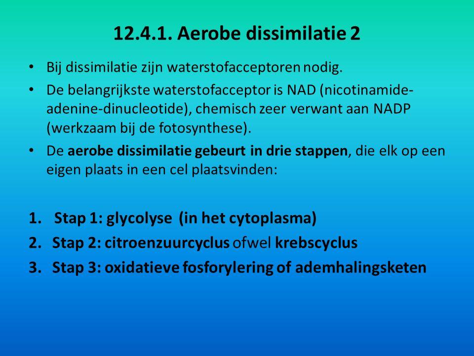 12.4.1. Aerobe dissimilatie 2 1. Stap 1: glycolyse (in het cytoplasma)