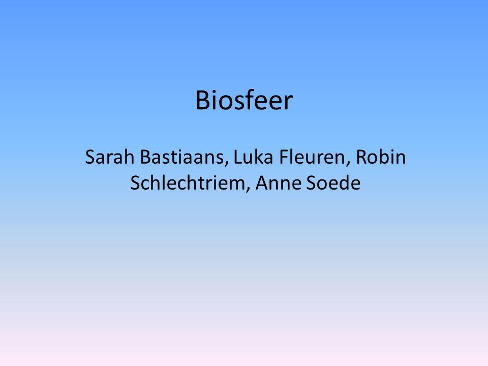 Sarah Bastiaans, Luka Fleuren, Robin Schlechtriem, Anne Soede
