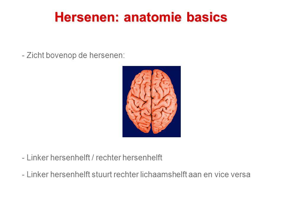 Hersenen: anatomie basics