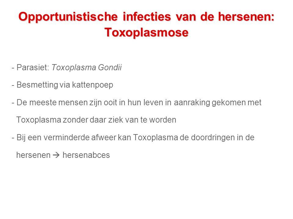 Opportunistische infecties van de hersenen: Toxoplasmose