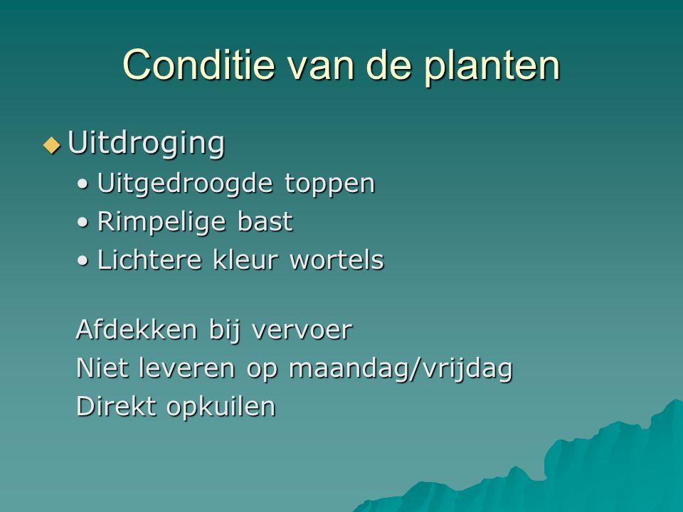 Conditie van de planten