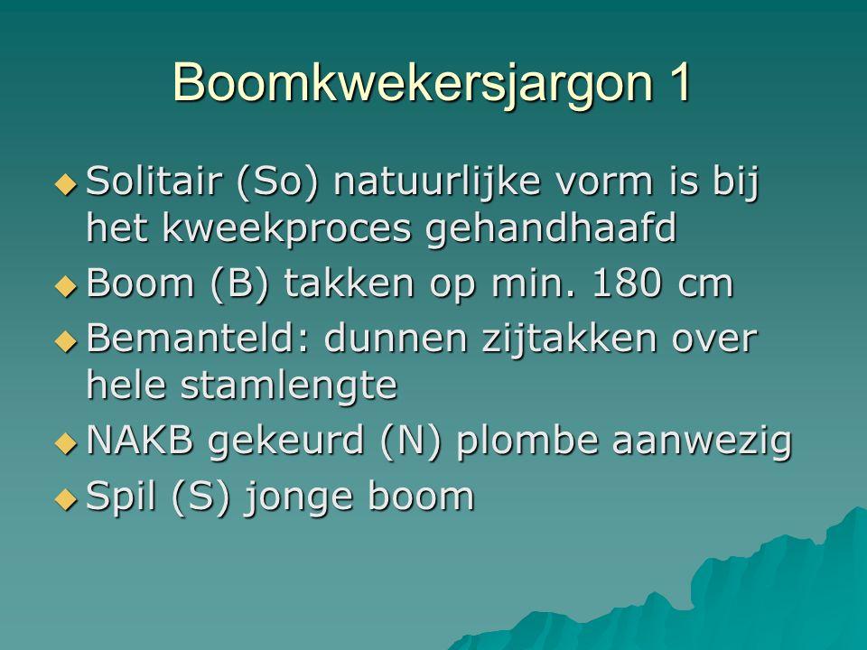 Boomkwekersjargon 1 Solitair (So) natuurlijke vorm is bij het kweekproces gehandhaafd. Boom (B) takken op min. 180 cm.