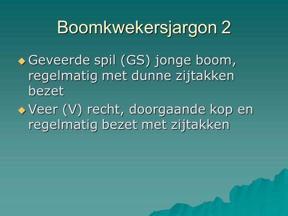 Boomkwekersjargon 2 Geveerde spil (GS) jonge boom, regelmatig met dunne zijtakken bezet.