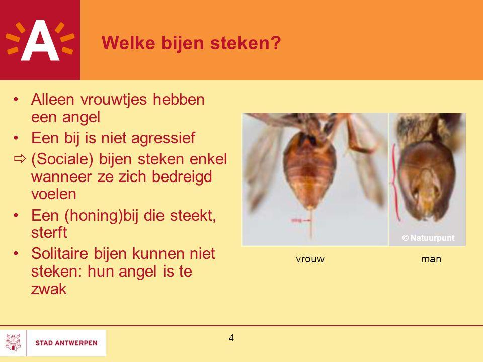 Welke bijen steken Alleen vrouwtjes hebben een angel