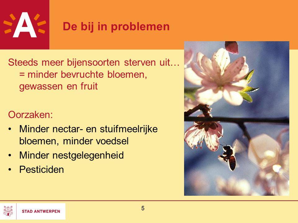 De bij in problemen Steeds meer bijensoorten sterven uit… = minder bevruchte bloemen, gewassen en fruit.