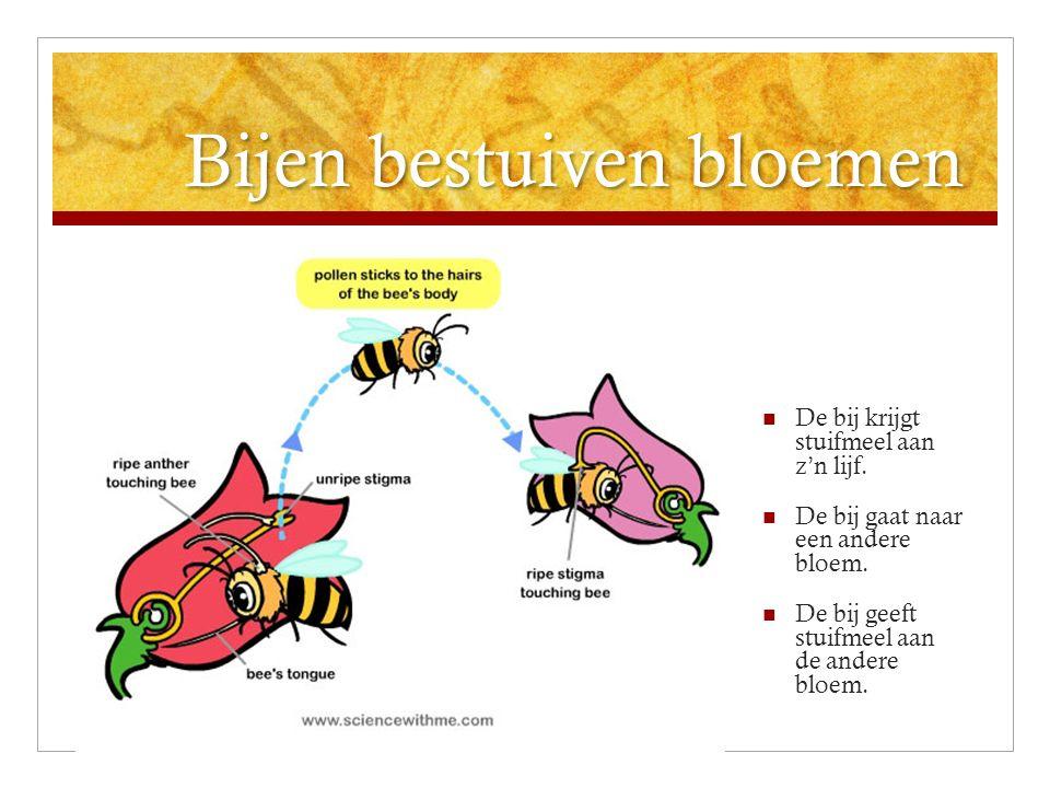 Bijen bestuiven bloemen