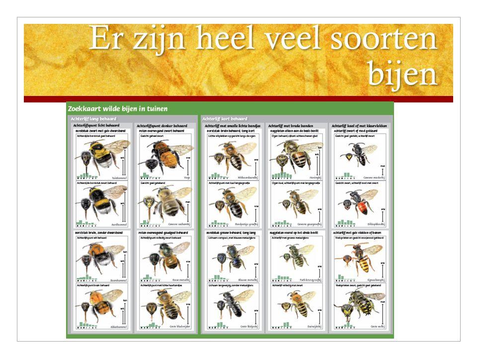 Er zijn heel veel soorten bijen