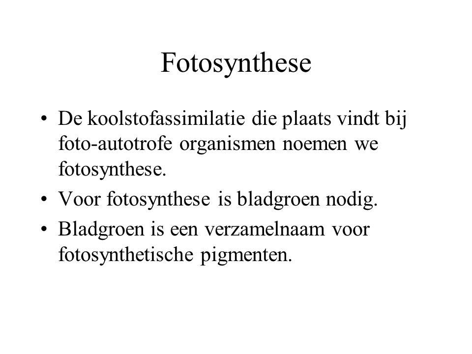Fotosynthese De koolstofassimilatie die plaats vindt bij foto-autotrofe organismen noemen we fotosynthese.