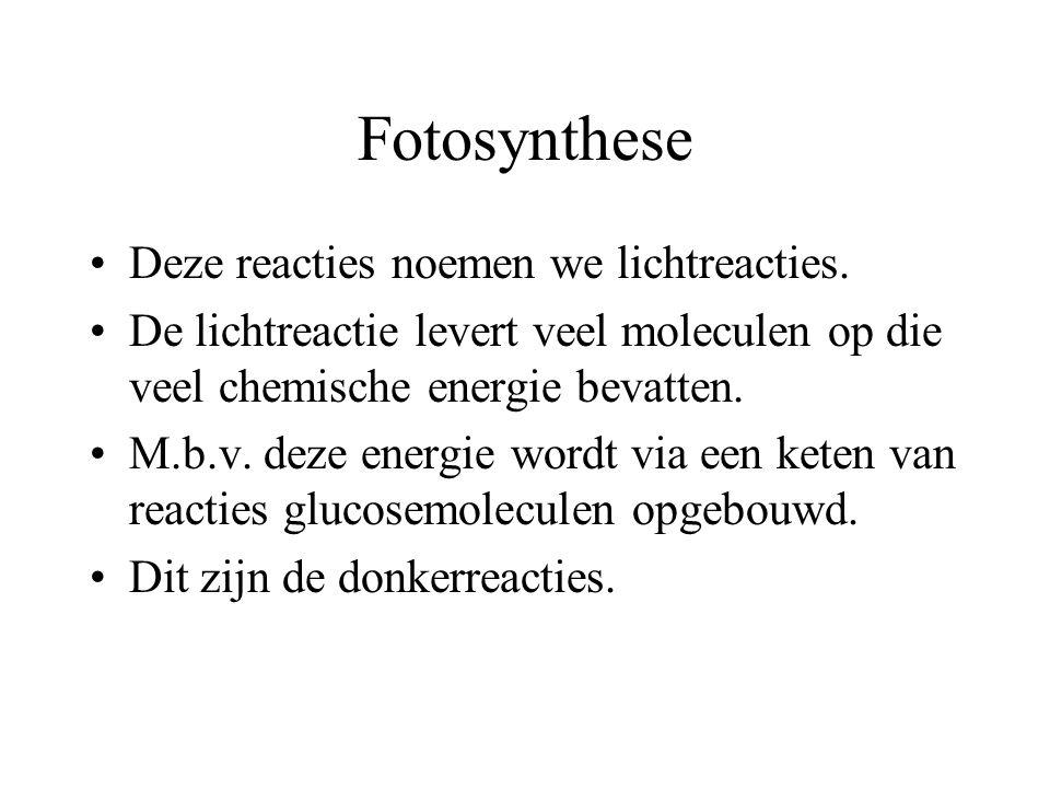 Fotosynthese Deze reacties noemen we lichtreacties.
