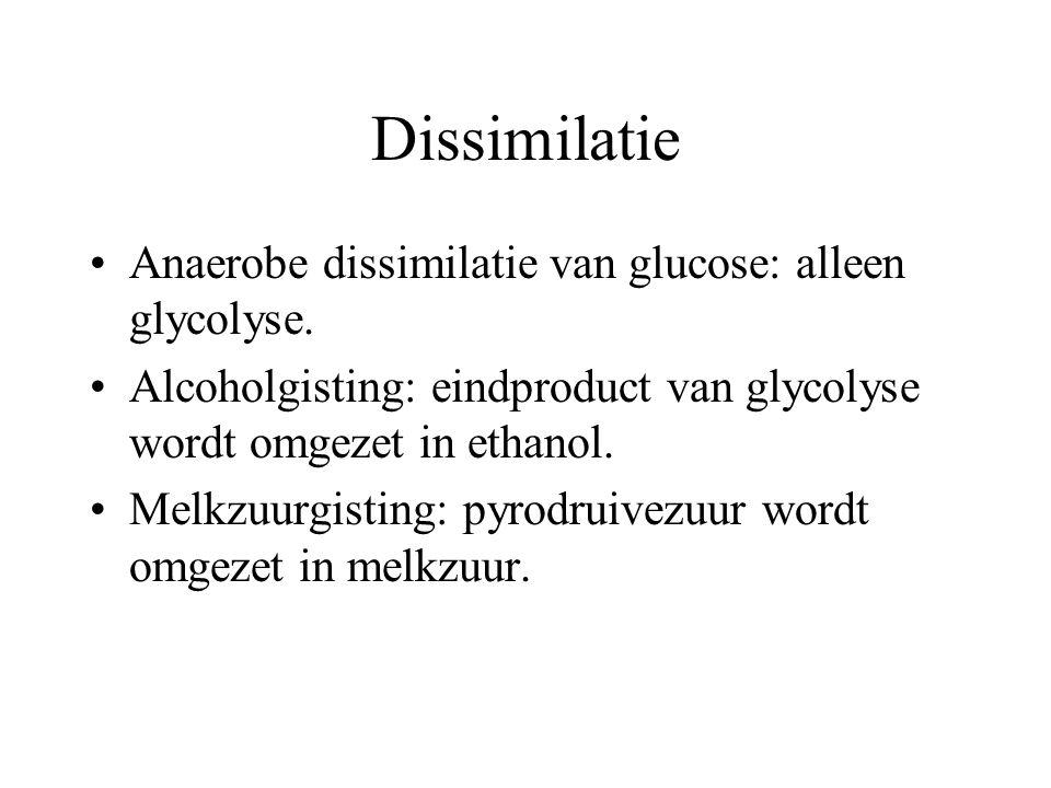 Dissimilatie Anaerobe dissimilatie van glucose: alleen glycolyse.