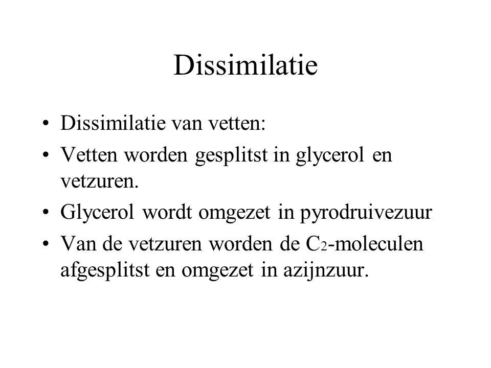 Dissimilatie Dissimilatie van vetten: