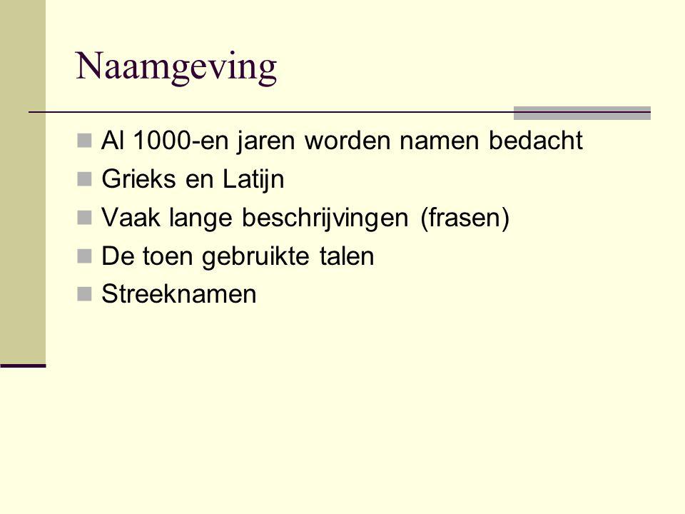 Naamgeving Al 1000-en jaren worden namen bedacht Grieks en Latijn