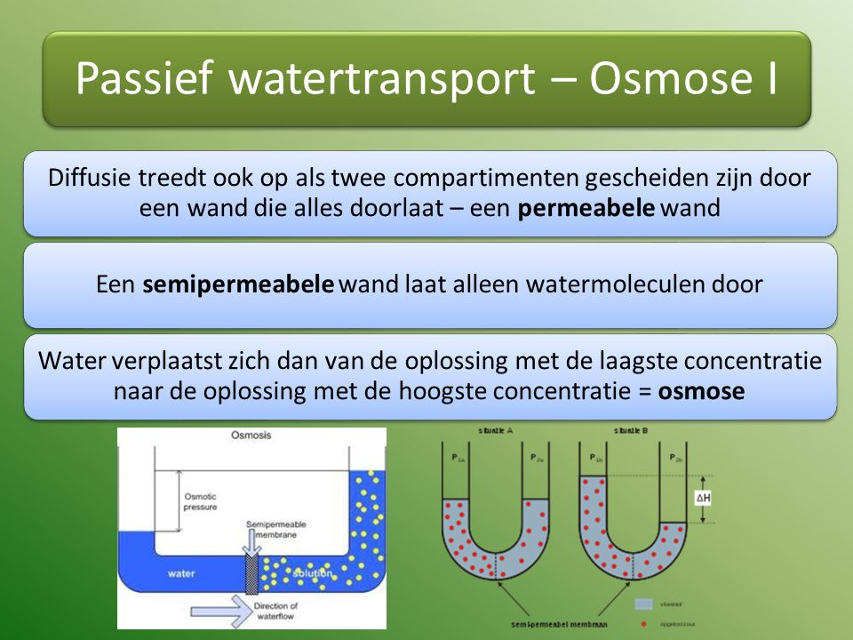 Passief watertransport – Osmose I