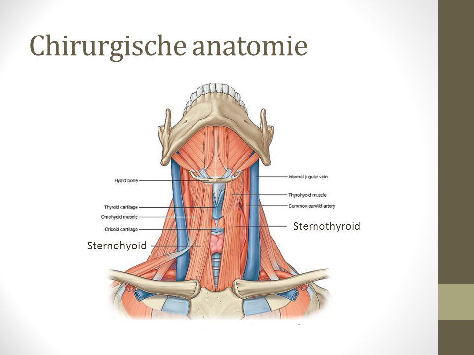 Chirurgische anatomie