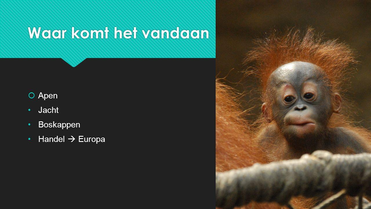 Waar komt het vandaan Apen Jacht Boskappen Handel  Europa
