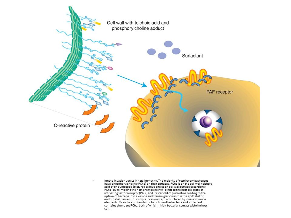 Innate invasion versus innate immunity