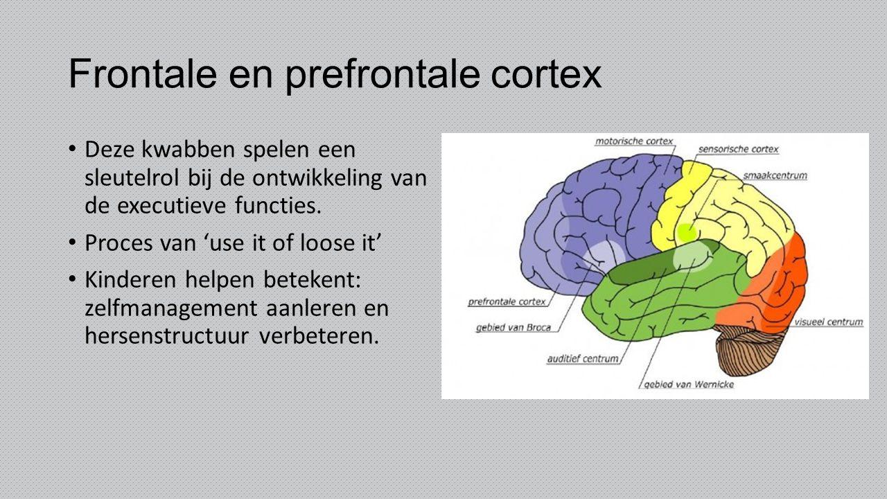 Frontale en prefrontale cortex