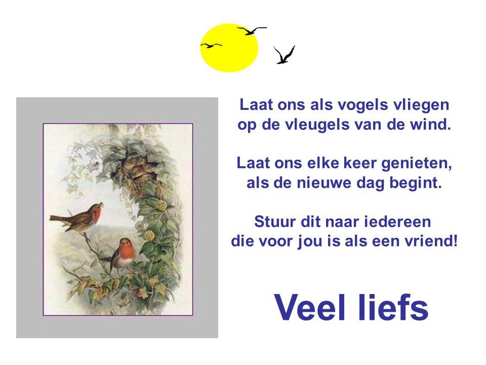 Veel liefs Laat ons als vogels vliegen op de vleugels van de wind.