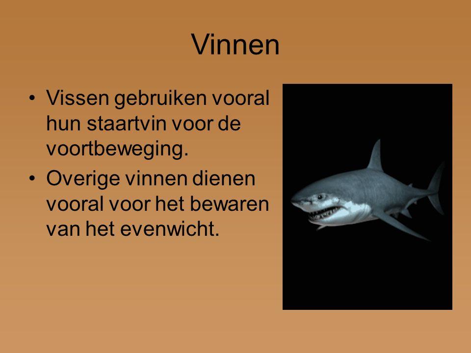 Vinnen Vissen gebruiken vooral hun staartvin voor de voortbeweging.