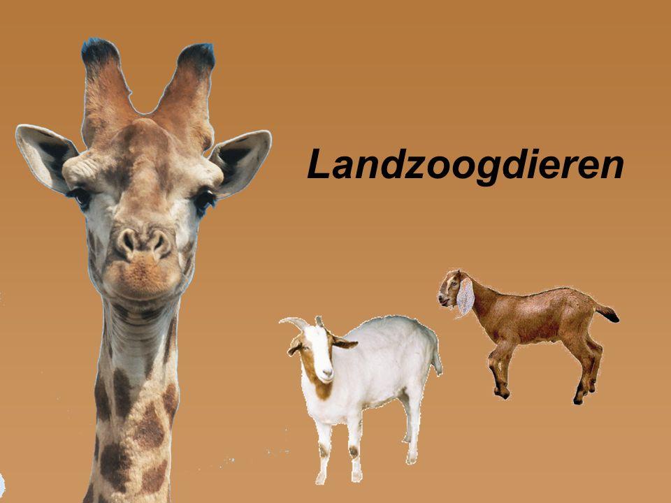Landzoogdieren