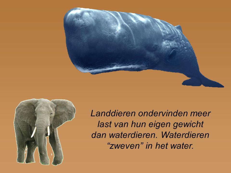 Landdieren ondervinden meer last van hun eigen gewicht dan waterdieren