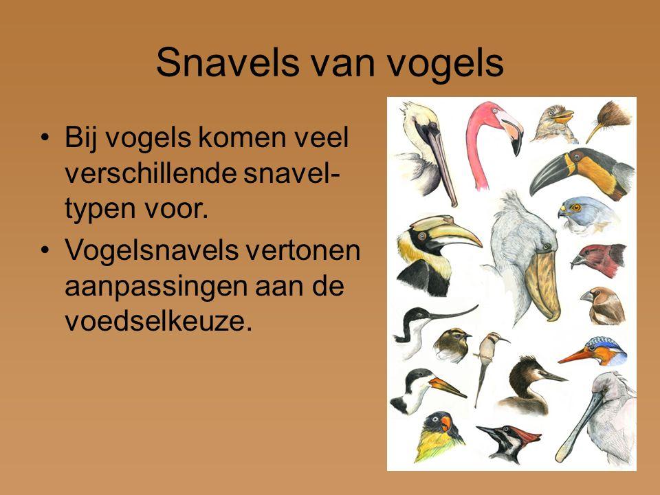 Snavels van vogels Bij vogels komen veel verschillende snavel-typen voor.