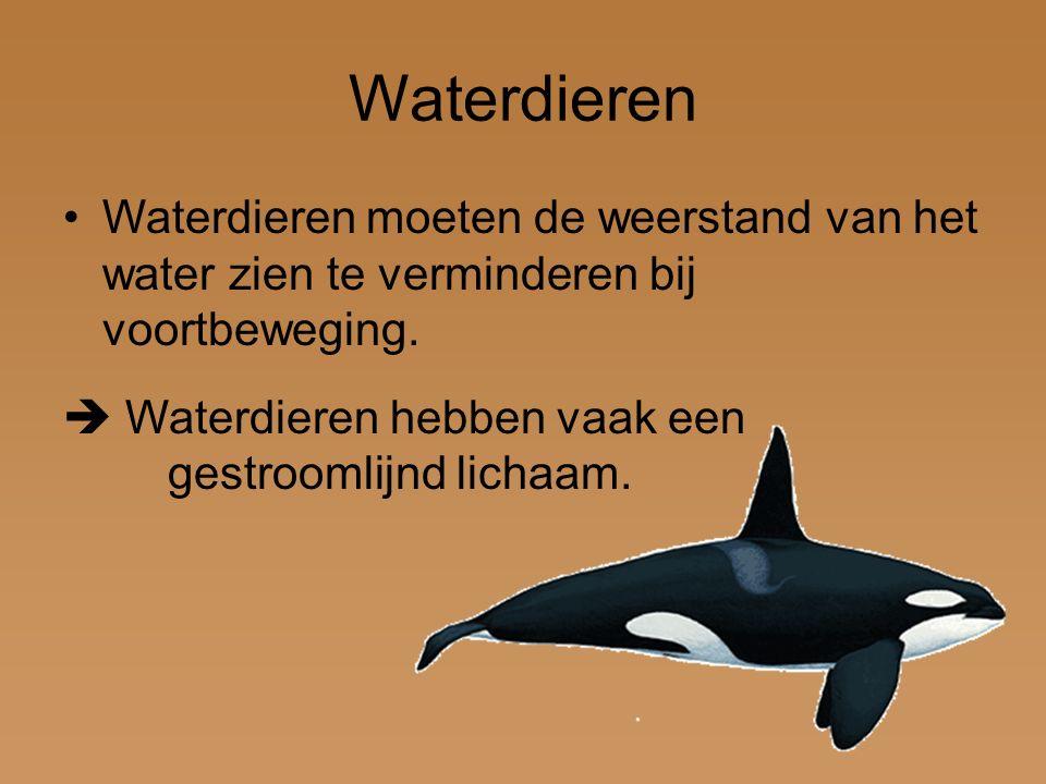 Waterdieren Waterdieren moeten de weerstand van het water zien te verminderen bij voortbeweging.