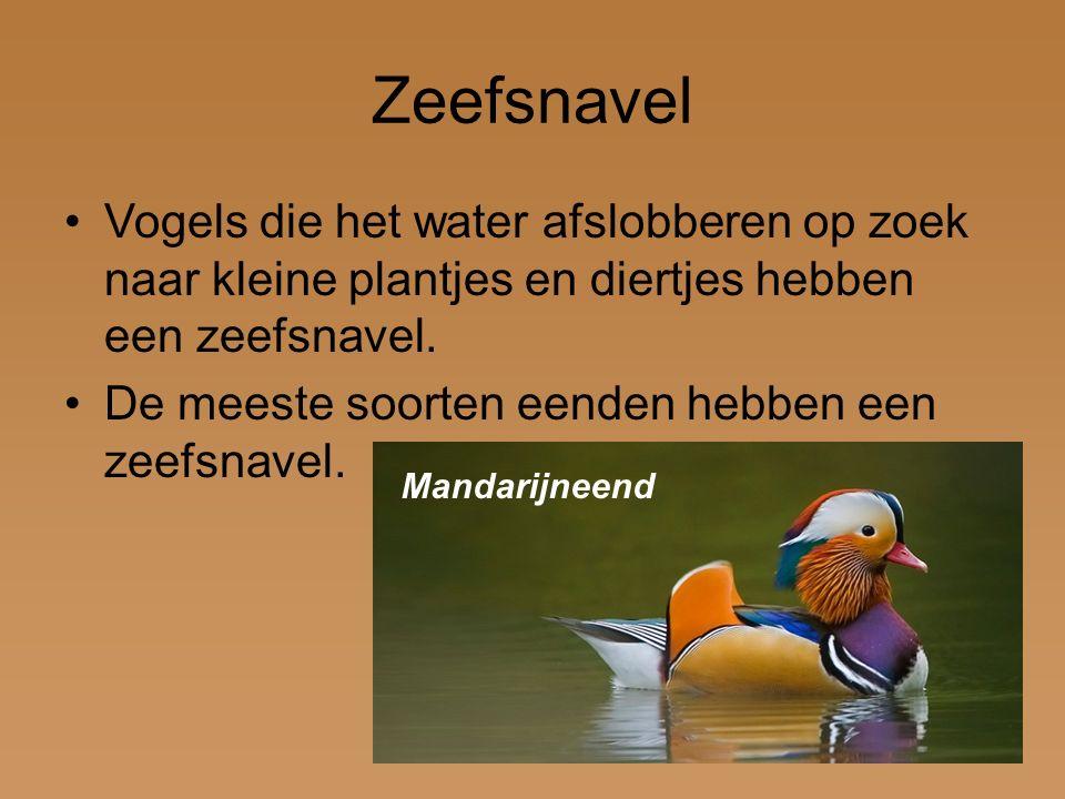 Zeefsnavel Vogels die het water afslobberen op zoek naar kleine plantjes en diertjes hebben een zeefsnavel.