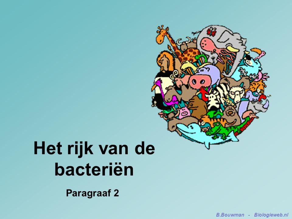 Het rijk van de bacteriën