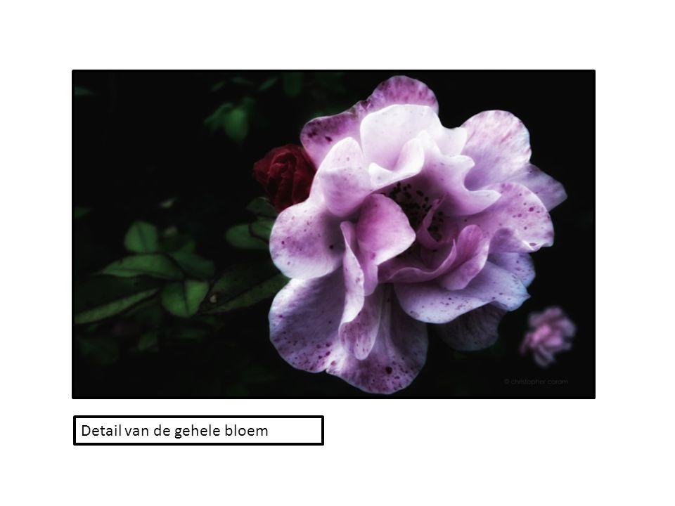 Detail van de gehele bloem