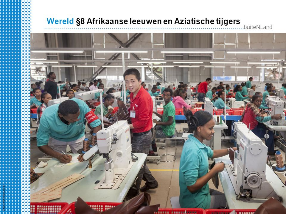 §8 Afrikaanse leeuwen en Aziatische tijgers