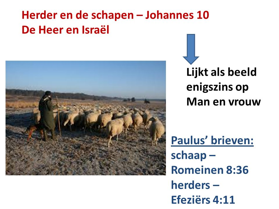 Herder en de schapen – Johannes 10
