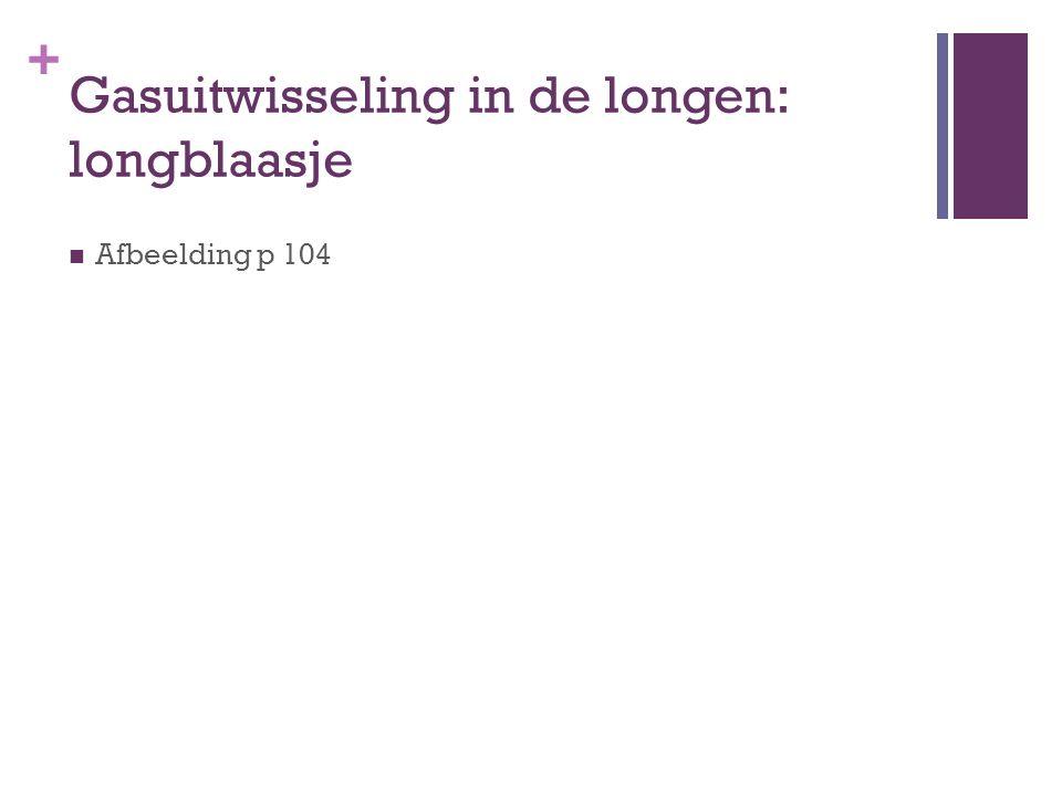Gasuitwisseling in de longen: longblaasje