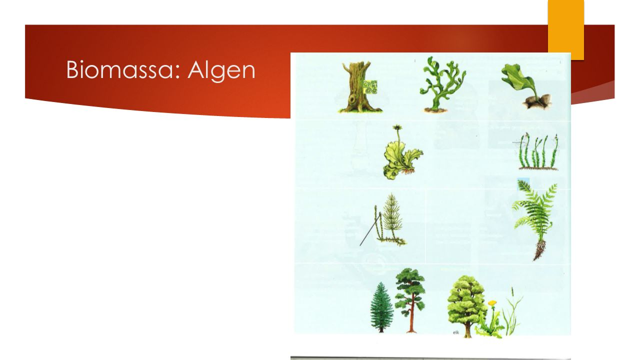 Biomassa: Algen
