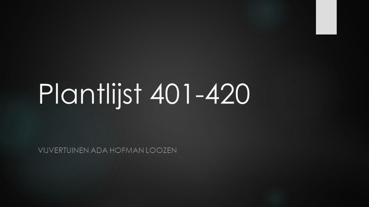 Vijvertuinen Ada hofman loozen
