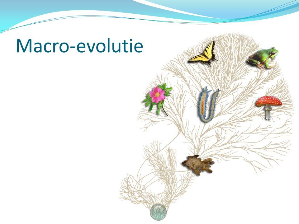 Macro-evolutie