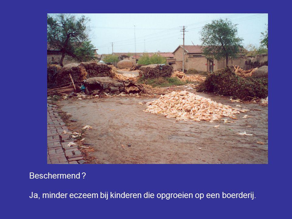 Beschermend Ja, minder eczeem bij kinderen die opgroeien op een boerderij.