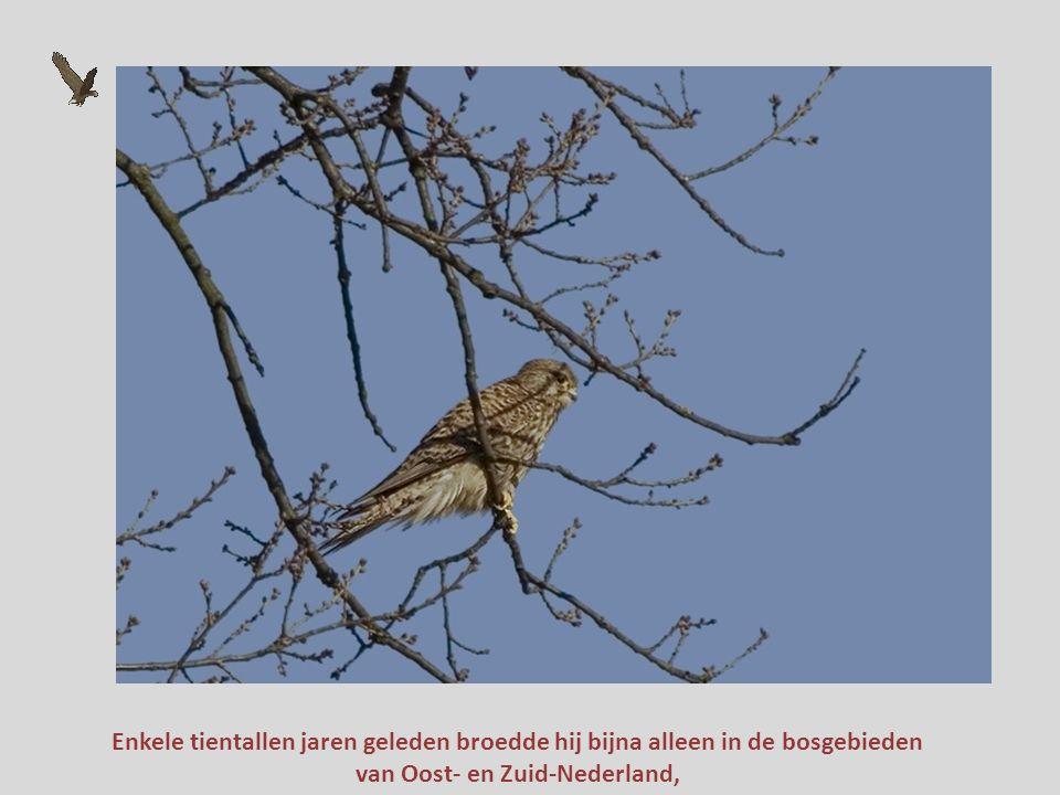 van Oost- en Zuid-Nederland,